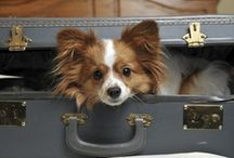 Pet Friendly Hotels & Resorts / We want to go on vacation too!