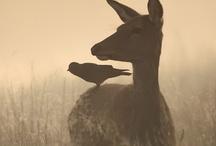 Fog, Mist & Rain / by Guided Dreams