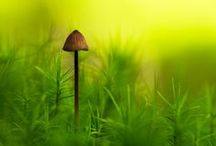 Ferns, Mosses & Fungi / by Guided Dreams