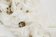 White / by A Clementina