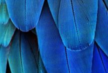Blue / by A Clementina