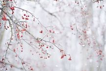Winter / by A Clementina