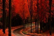 Autumn / by Dean White