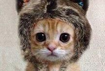 cat (●ↀωↀ●)