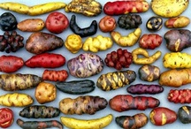 Grow your own veggies / All about sawing, growing, harvesting & storing different vegetables. Some things about permaculture and other 'religions'.