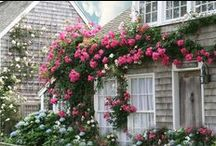 Cottages / Cute and charming cottages. / by Loribeth Clark