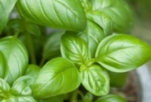 Grow your own Herbs / All about growing, harvesting and preserving Herbs.