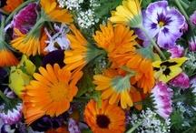 Edible Flowers