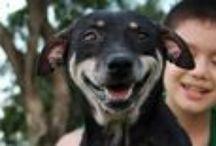 Animal Stories Pet Adoptions