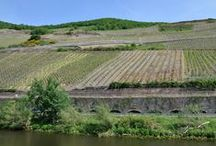Mosel River Cruise / Along the Mosel, past steep slope vineyards and sleepy medieval towns.