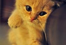animals<3 / by Destinee McCoy