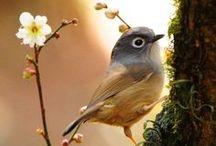 Birds / by Chiara Pompei