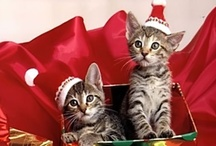'Tis the Season for... Cats!