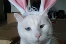 Cats and Easter