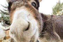 donkey love / Donkeys.  Love.