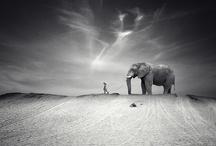 Elephants!!!! / by Emma Leake