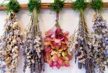 ☽ Apothecary,Natural Healing,Homeopathic, Potions ☾☤ / Health and beauty / by April Lindblom