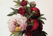 Kvetiny kvetiny tetovanie