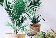 PLANTEN & BLOEMEN   Inspiratie / Planten zijn een belangrijk voor de sfeer in huis. En ze leveren een gezonde bijdrage aan onze leefomgeving. Styling ID Kleur inspiratie. #wonen #woonideeën #woondecoratie #woonaccessoires #interieur #interieurtips #interieurideeën #plants #flowers #planten #bloemen #interieurinspiratie #interieurdesign #interieurstyling #stylingtips #sfeer #plant #groen #eco www.styling-id.nl