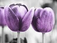 KLEUR   Purple and Grey / Styling ID Kleur inspiratie. #wonen #woonideeën #woondecoratie #woonaccessoires #interieur #interieurtips #interieurideeën #interieurinspiratie #interieurdesign #interieurstyling #stylingtips #sfeer #kleur #grijs #paars #grey #purple www.styling-id.nl
