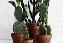 PLANTEN   Cactus / Planten zijn een belangrijk voor de sfeer in huis. En ze leveren een gezonde bijdrage aan onze leefomgeving. Styling ID Kleur inspiratie. #wonen #woonideeën #woondecoratie #woonaccessoires #interieur #interieurtips #interieurideeën #interieurinspiratie #interieurdesign #interieurstyling #stylingtips #sfeer #plant #groen #eco #cactus www.styling-id.nl