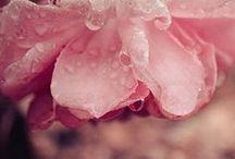 adoro las flores