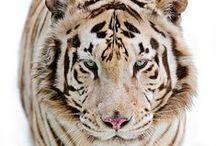 Fauna / by Sarah Johnson