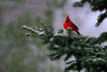 Cardinals / Matthew 6:26  Look at the birds of the air; they do not sow or reap or store away in barns, and yet your heavenly Father feeds them. Are you not much more valuable than they?  NO LIMIT ON PINS. ENJOY.  / by Jan Gruber