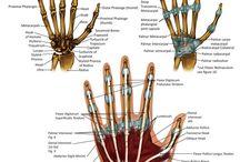 OT - Hand/UE
