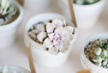 Inspired Wedding / by Andrea Victoria