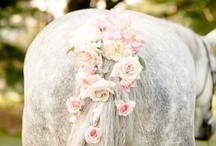 All my Pretty Horses / by Sara Hincapie