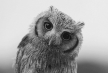 [ hoot___ ] / owls | owls | owls