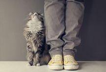 [ minou___ ] / cats | cat lovers