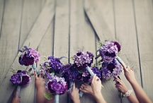 Violet & Lavender Wedding / by Envelopments