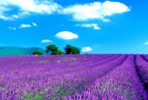 Provence / Images from Provence in the south of France. / by New England Handmade Artisan Soaps