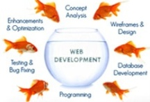 Web Development / Board Created by www.titleseo.com