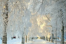 Winter White Wedding / by Envelopments