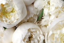 Wedding Flowers / by Envelopments