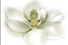 Magnolia Mania / by Betsy Winstead