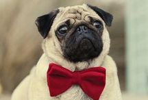 Bow Tie Day!