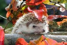 We love Autumn / Everything we love about autumn, wildlife, Halloween, Bonfire night, cosy nights in, bonfires, the colours.