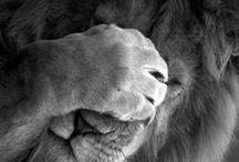 Indulgence : Animals