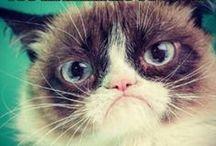 grumpy cat / =^. , .^=