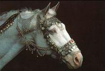 Horses / by Julia