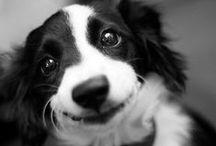 Sounds True Dogs / by Sounds True