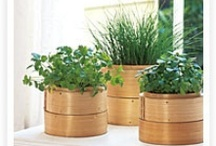 Herb gardens, patios, and backyards