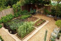 Kitchen Garden / by HopeMarie Schneider