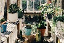 plants!!