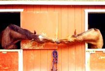 Horseriding + Equestrian Brands