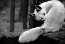 mascotas / by Beyta